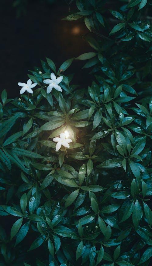 녹색, 자연 사진, 자연 생활, 자연의의 무료 스톡 사진