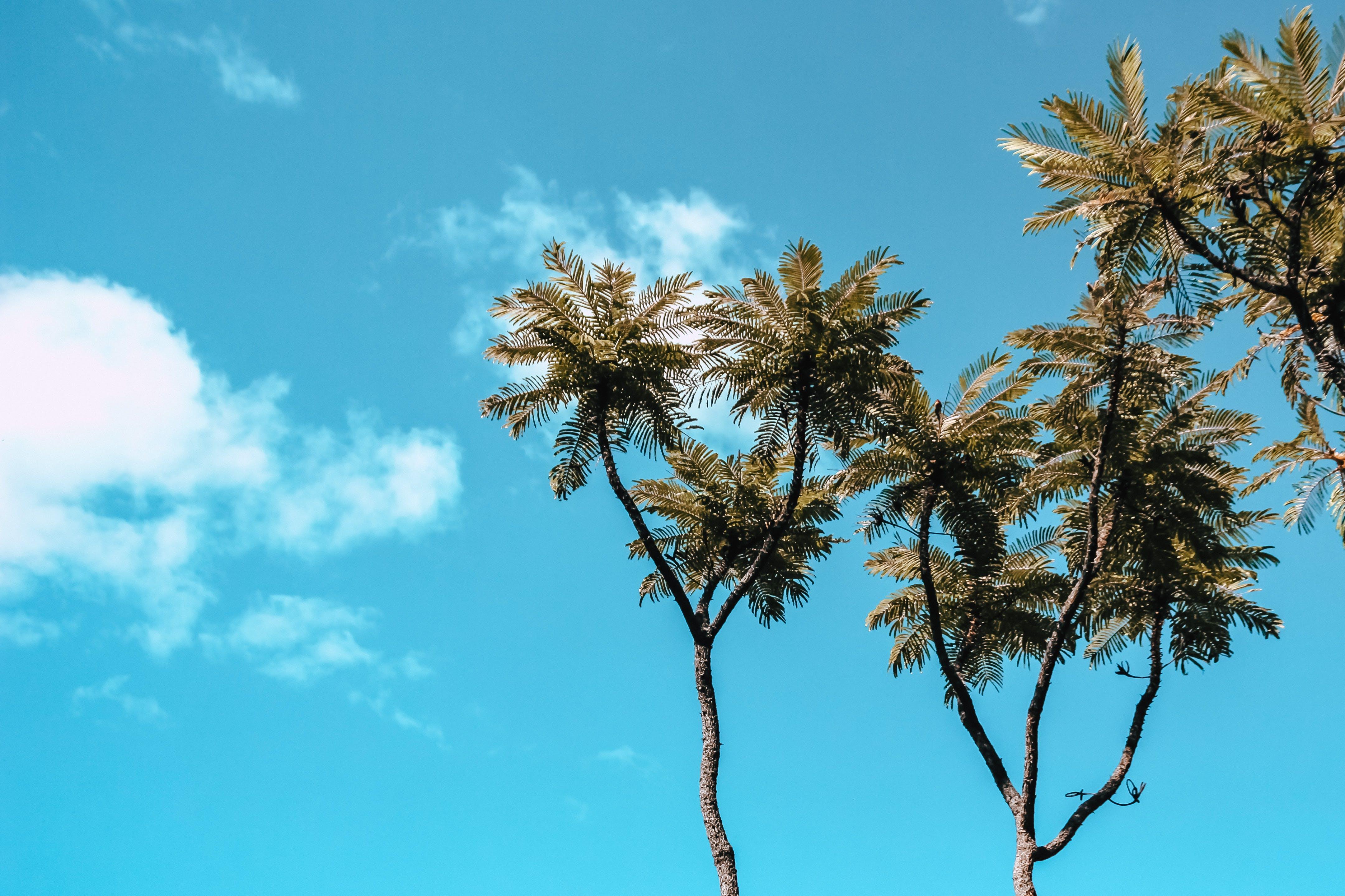 Kostenloses Stock Foto zu himmel, bäume, perspektive, tageslicht
