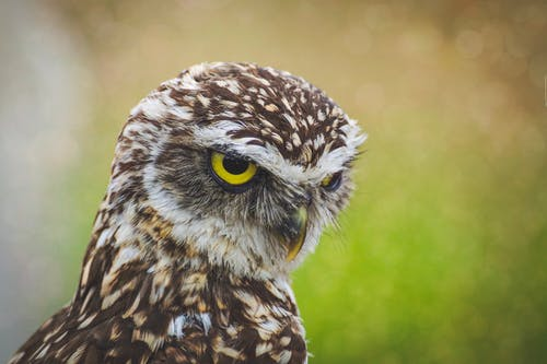 Selective-focus Photography of Brown Owl