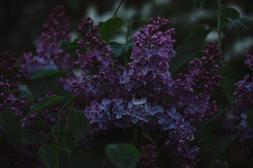 Darmowe zdjęcie z galerii z flora, kwiat, kwiaty, płatki