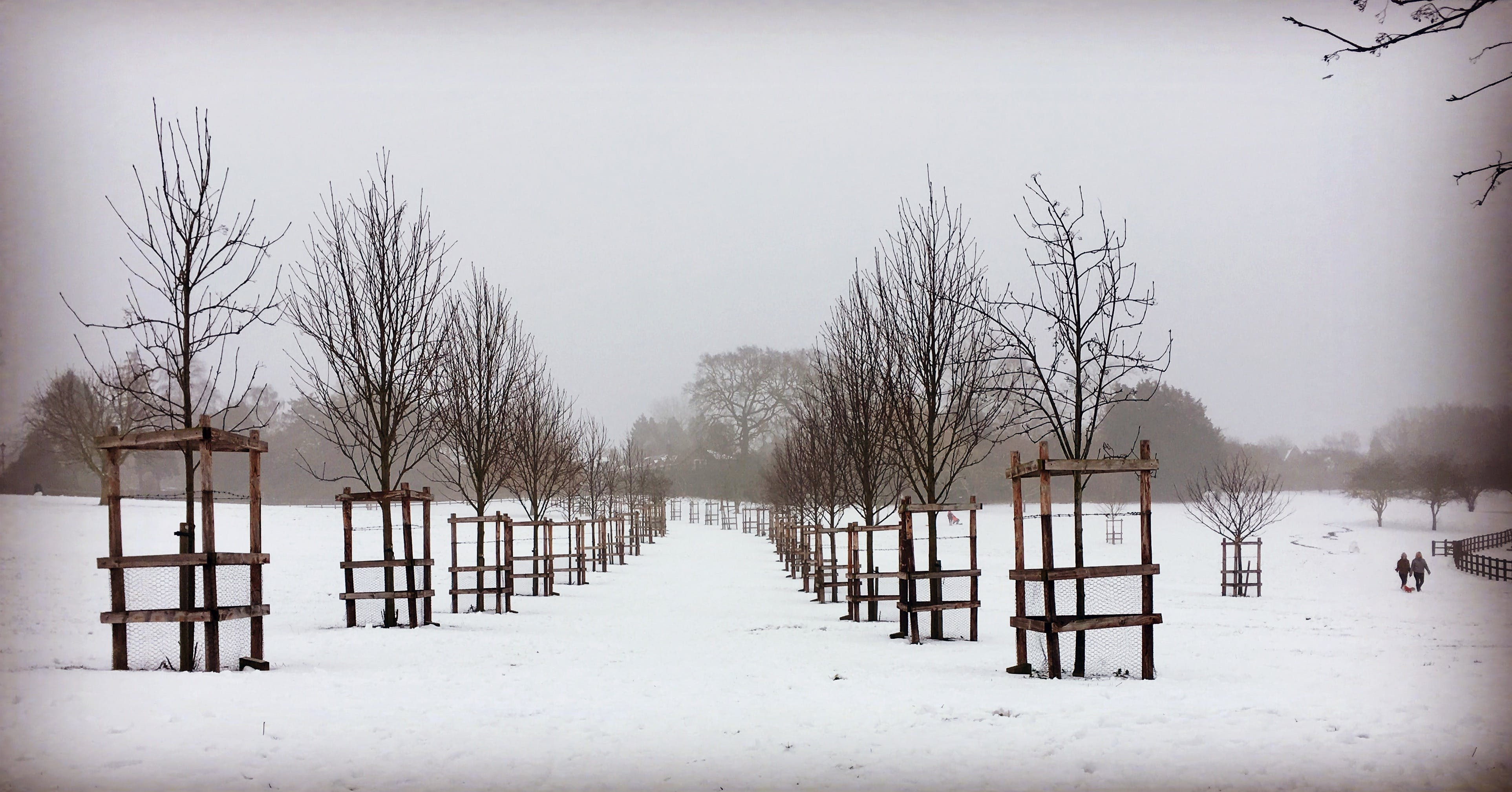 Free stock photo of cold, Snow covered park, snowy, winter