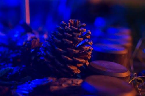 Free stock photo of blue, brown, cone, garden