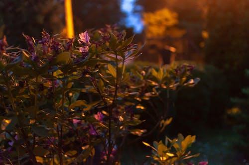 Free stock photo of flower, flowers, garden, green