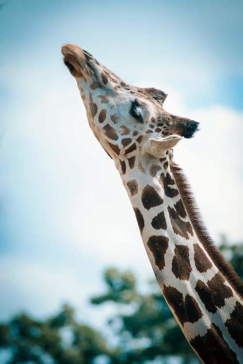 Immagine gratuita di animale, animale selvatico, carino, collo
