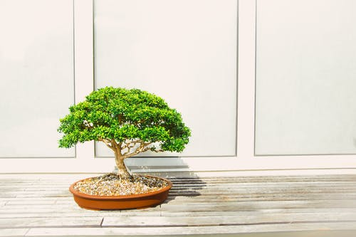 Gratis lagerfoto af bonsai, have, plante