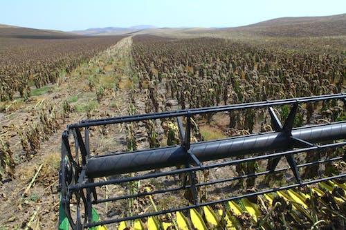 Free stock photo of armenia, artsakh, harvest, harvester
