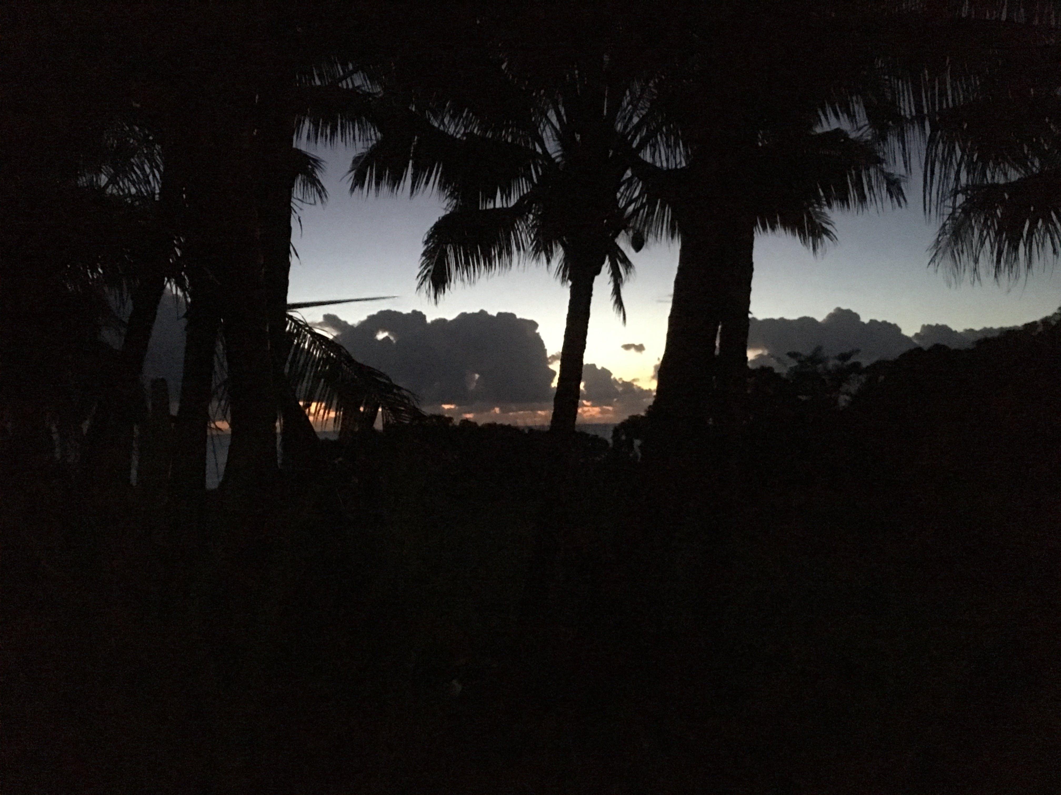 Free stock photo of hawaii, palm trees, shadows, silhouette