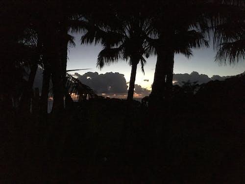 Foto d'estoc gratuïta de capvespre, Hawaii, ombres, palmeres