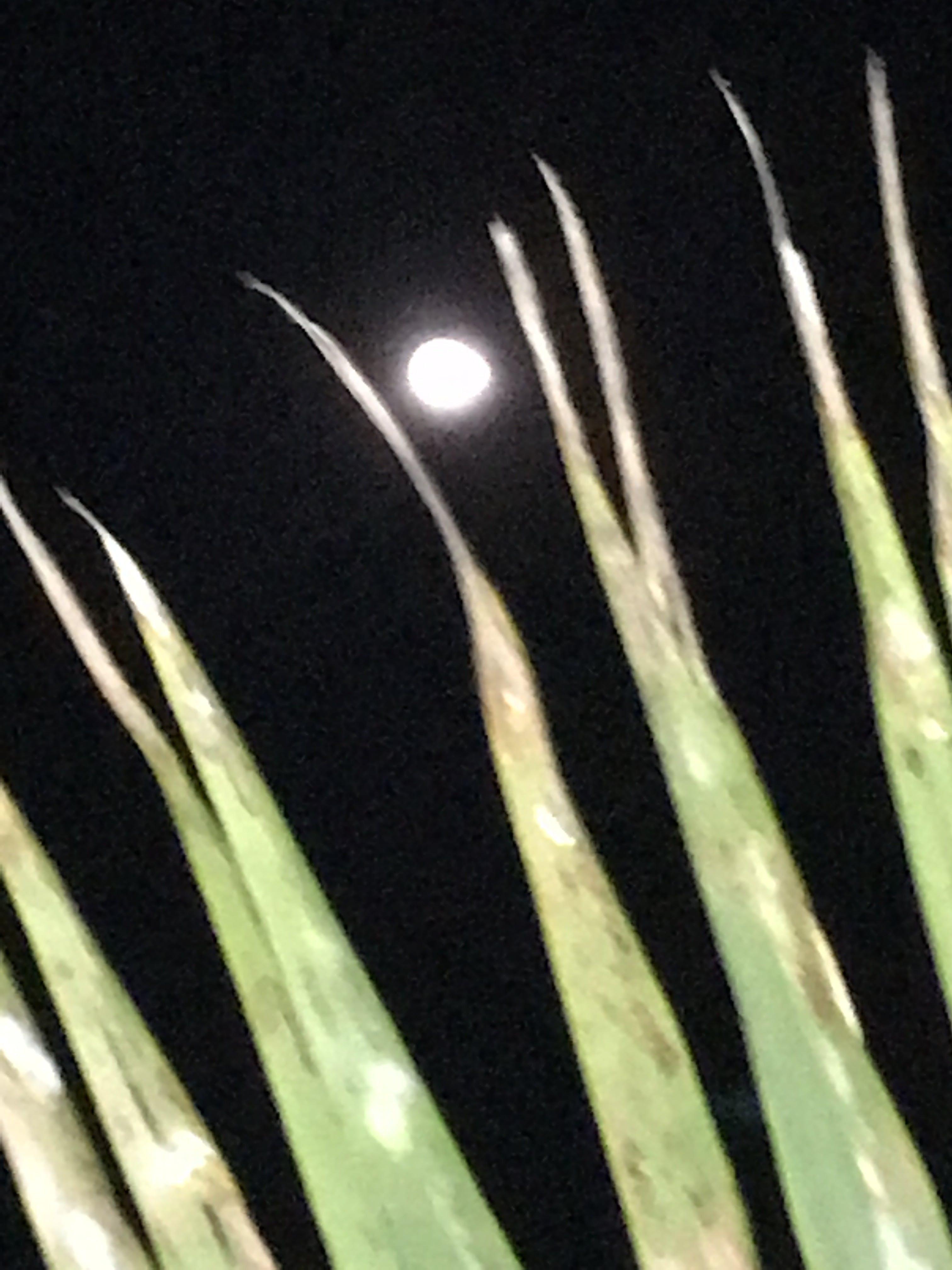 Free stock photo of night, palm trees