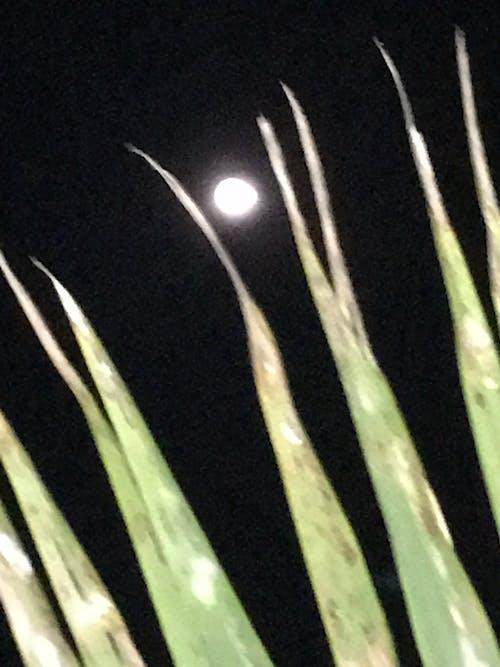 Foto d'estoc gratuïta de nit, palmeres