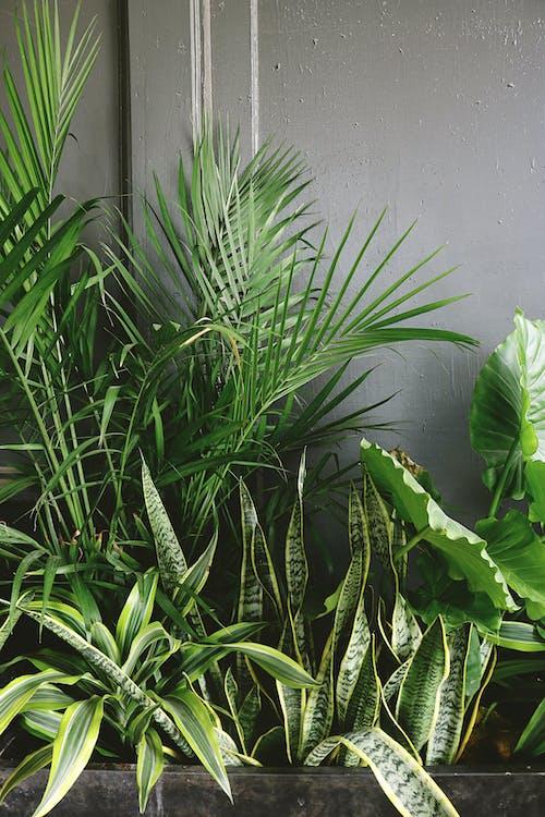 Fotobanka sbezplatnými fotkami na tému bylinka, čerstvosť, čerstvý, debna s rastlinami