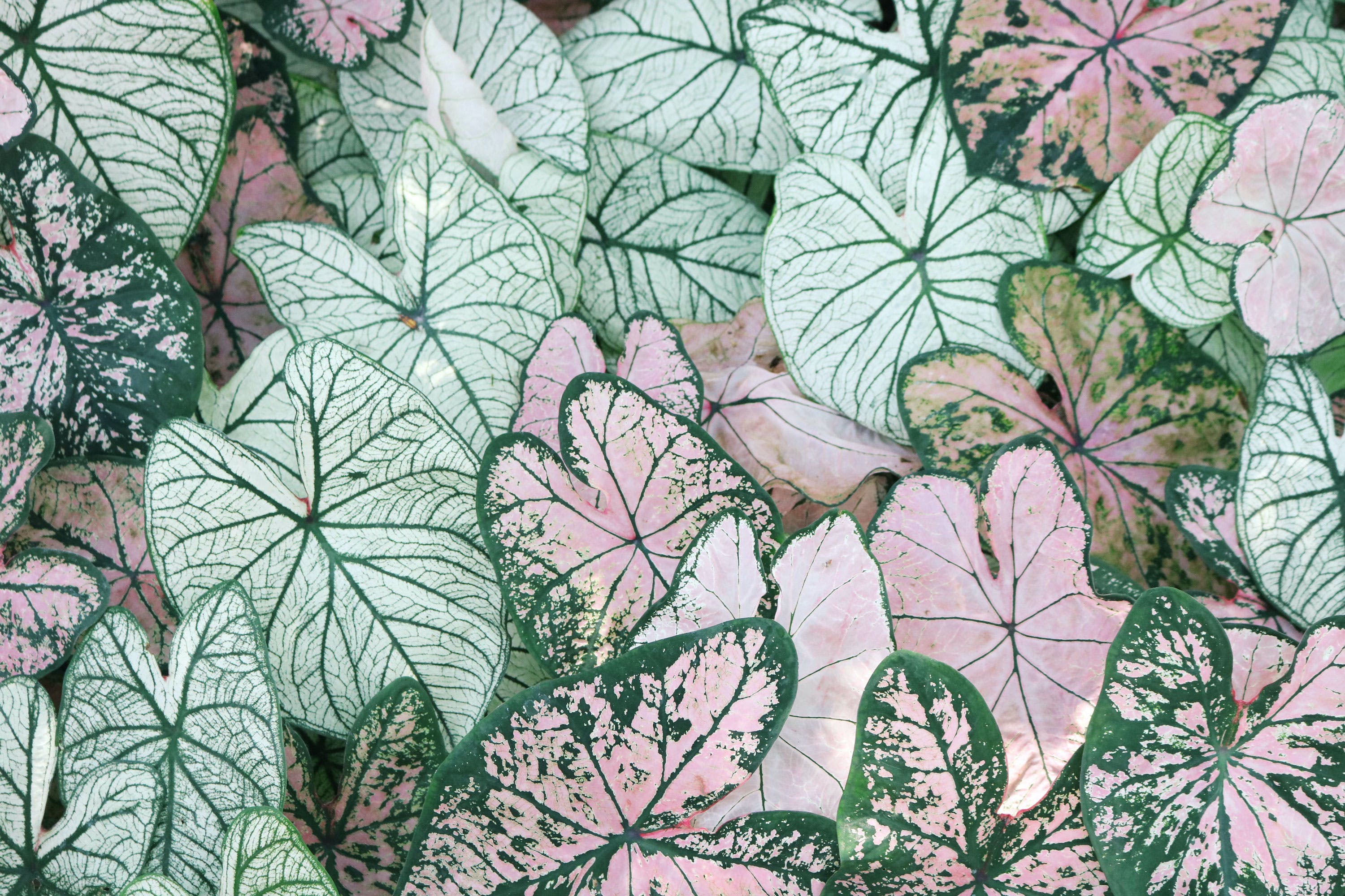 Photo of Leaves