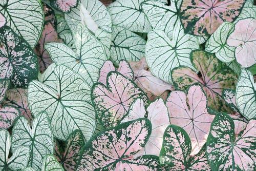 Darmowe zdjęcie z galerii z abstrakcyjny, botaniczny, ciemnozielone rośliny, dekoracja
