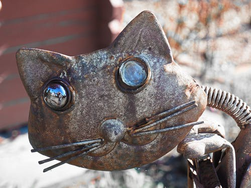 Free stock photo of cat, cat eyes, cat face, rust