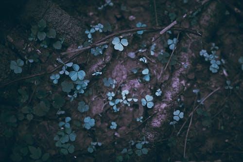 Gratis arkivbilde med gress, vakker