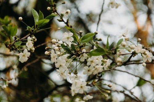 Безкоштовне стокове фото на тему «дерево, квіти, макрофотографія, пелюстки»