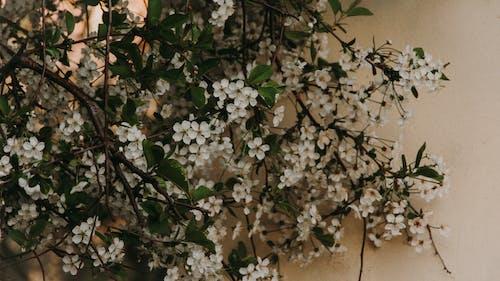 Darmowe zdjęcie z galerii z flora, kwiat, kwiaty, liście