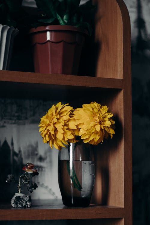 Základová fotografie zdarma na téma flóra, kontejner, kvést, květ