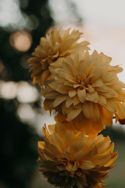 Безкоштовне стокове фото на тему «завод, макрофотографія, пелюстки, флора»