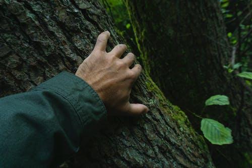 Foto d'estoc gratuïta de arbre, escorça d'arbre, mà