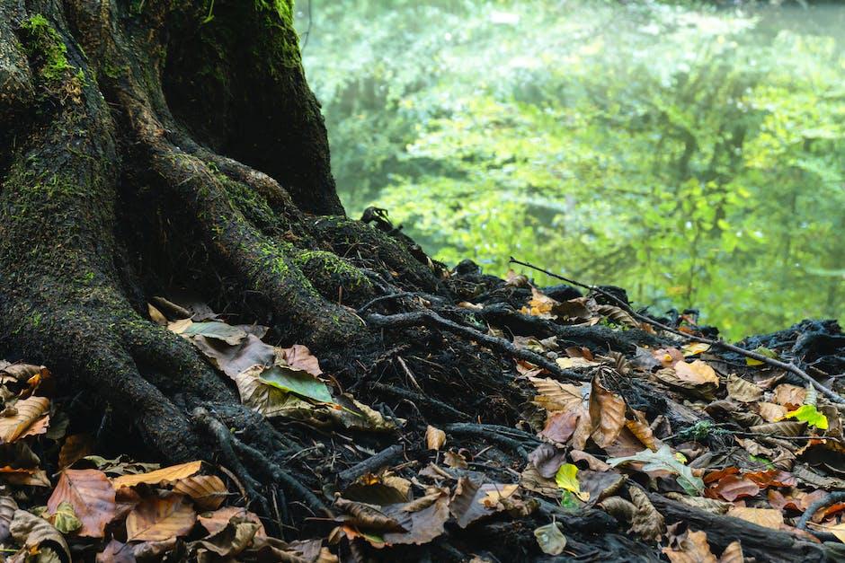 Photo Of Dried Leaves Near Tree