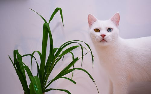Cat Beside A Plant