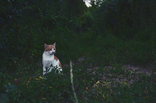 Безкоштовне стокове фото на тему «домашня тварина, кицька, кішка, котячі»