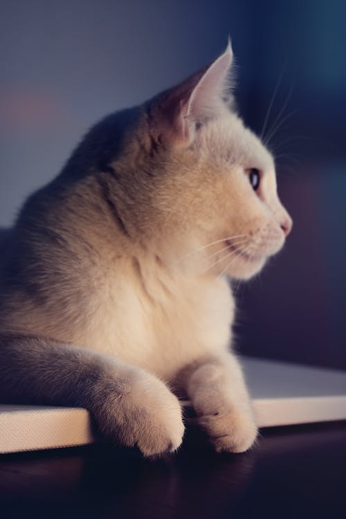 adorabil, animal, animal de casă