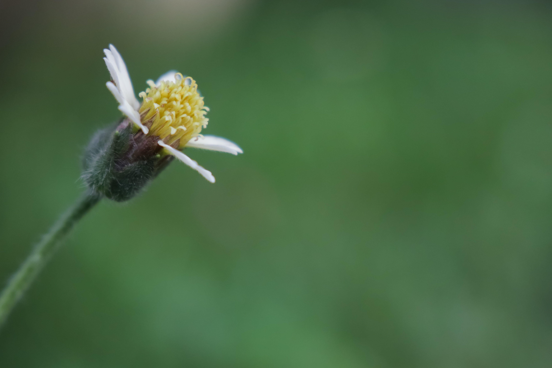 Free stock photo of flowers, macro photography, morning