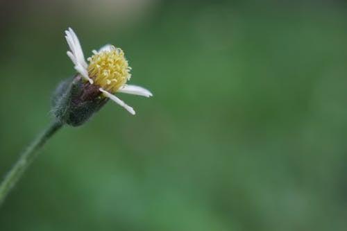 Kostnadsfri bild av blommor, makrofotografi