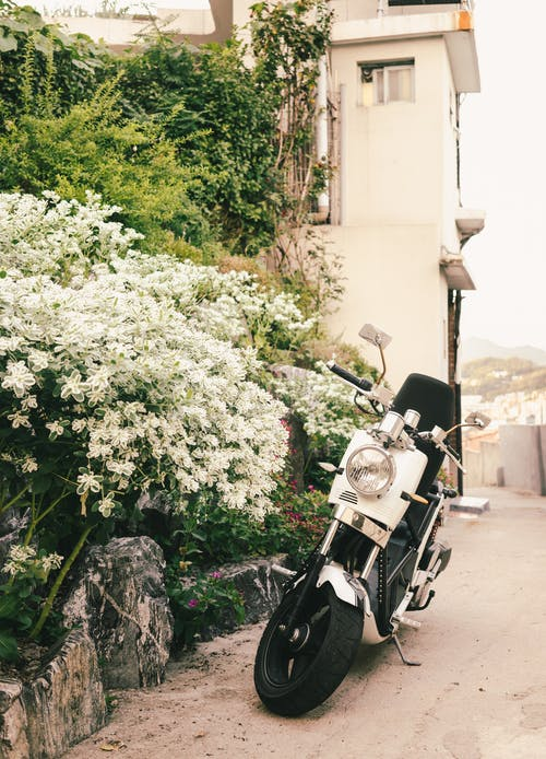 White and Black Motor Scooter Parked Besides White Petaled Flowers Near White Building