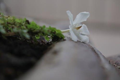 Kostnadsfri bild av blommor, grön, kastrull
