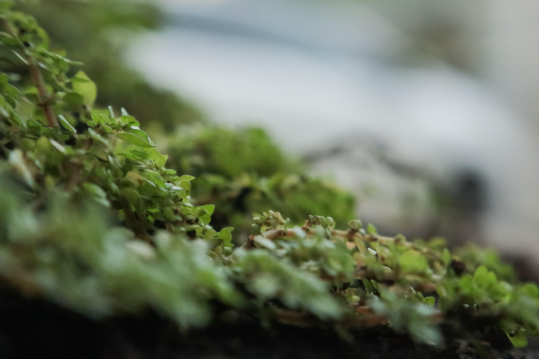Free stock photo of green, macro photography, pot