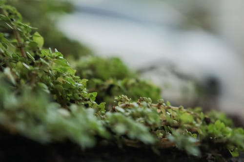 Kostnadsfri bild av grön, kastrull, makrofotografi