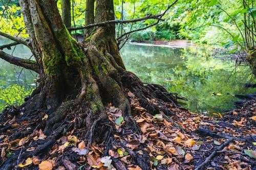 Δωρεάν στοκ φωτογραφιών με βρεγμένος, βρύο, γαβγίζω, δέντρο