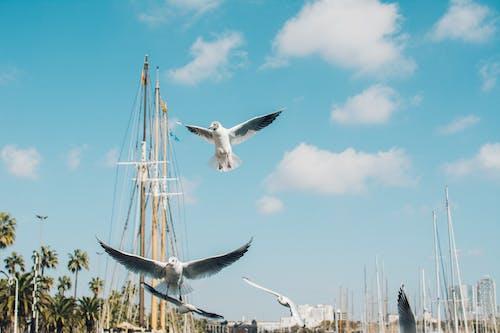 Darmowe zdjęcie z galerii z błękitne niebo, dok, krajobraz, latanie