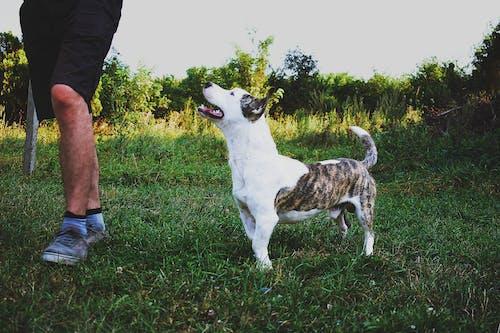 Fotos de stock gratuitas de animal, arboles, campo, canino