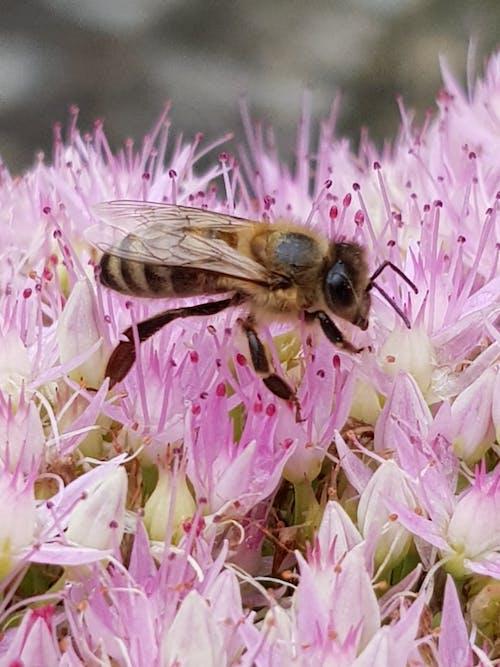 Foto d'estoc gratuïta de abella, abelles