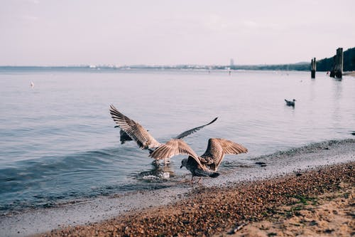 Two Gulls on Shore