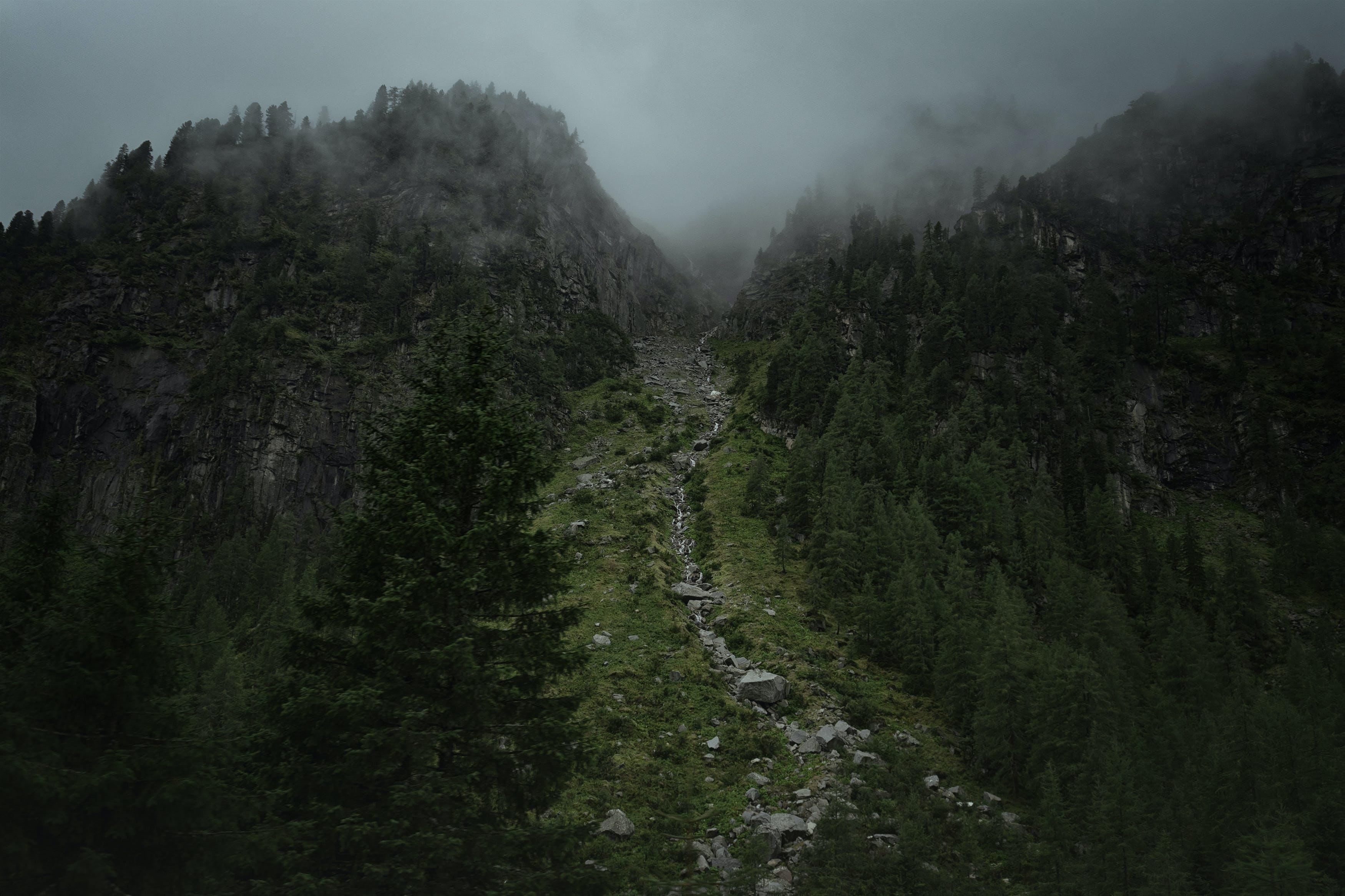 Gratis stockfoto met bergafwaarts, bergen, bergopwaarts, bomen