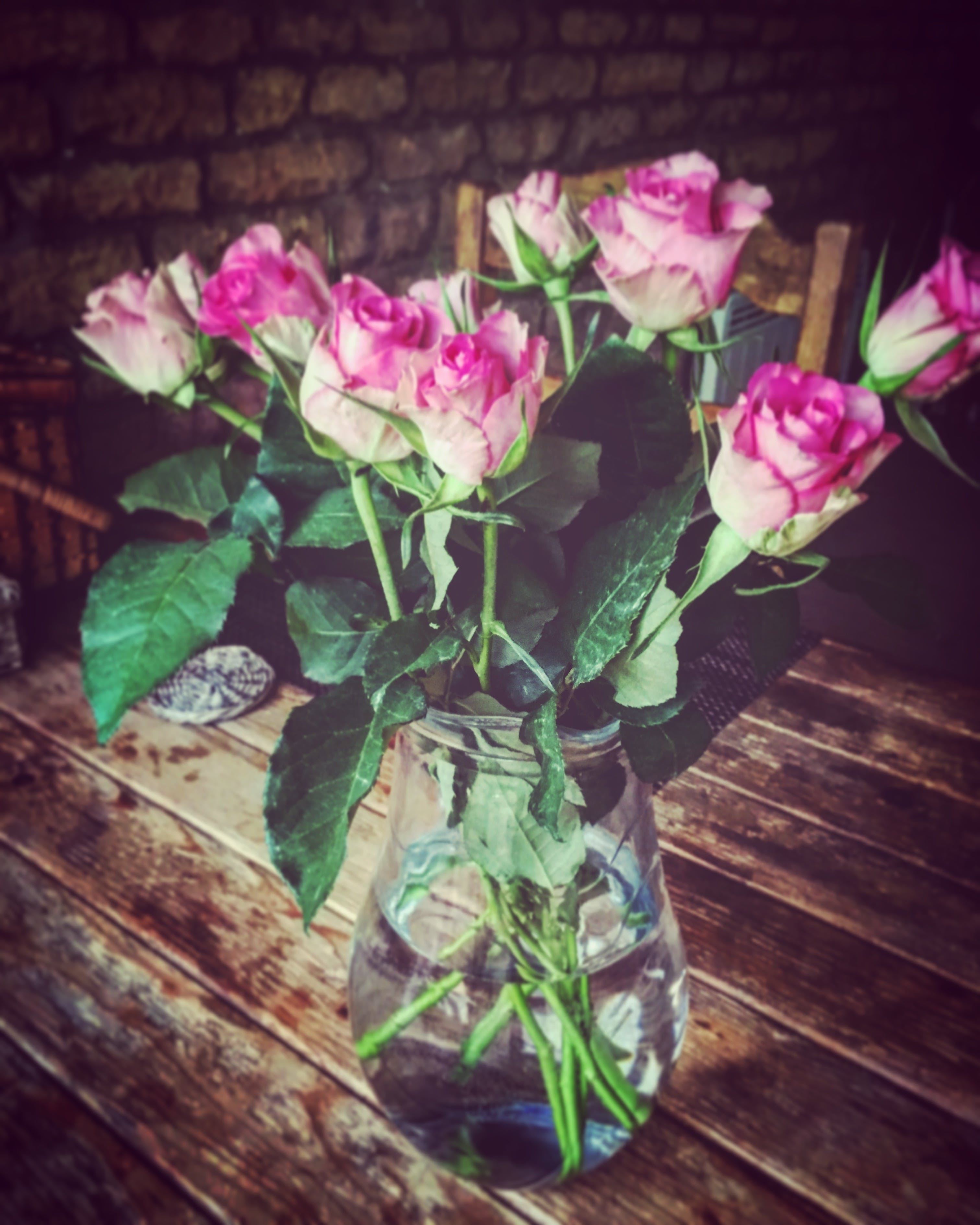 Free stock photo of roses, vase