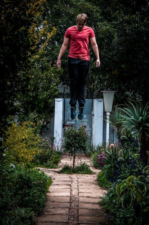Imagine de stoc gratuită din adult, arbori, concentrare, grădină