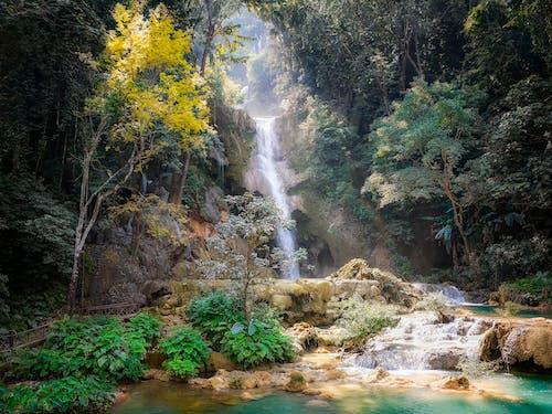 Foto d'estoc gratuïta de arbres, bosc, cascada, cascades