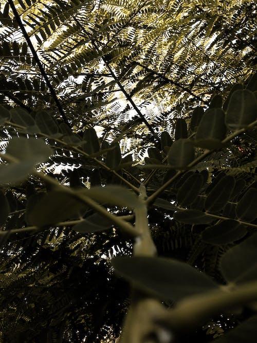 Foto profissional grátis de natureza, papel de parede de telefone