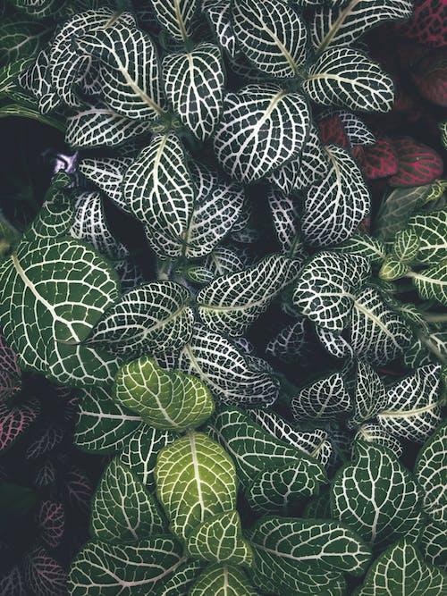 Kostnadsfri bild av 4k tapeter, fernblad, grön, tapet