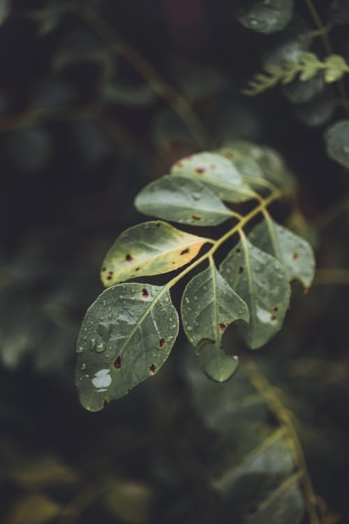 Foto stok gratis alam, berfokus, hijau, latar belakang kabur