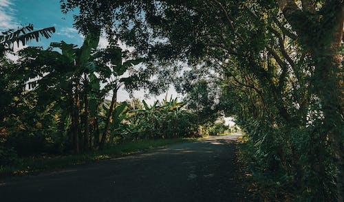 Ảnh lưu trữ miễn phí về ánh sáng ban ngày, cây, cỏ, danh lam thắng cảnh