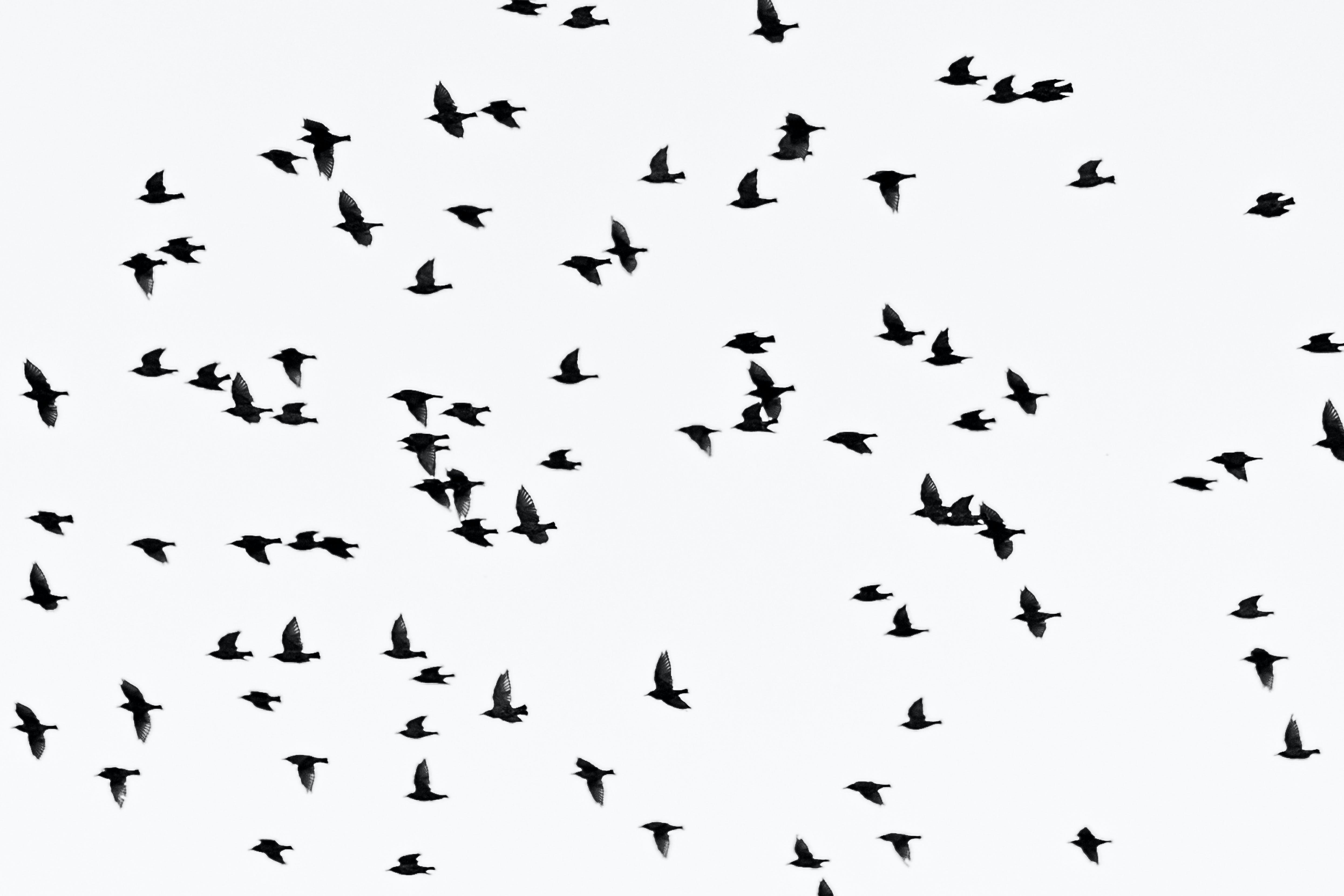 Low Angle Photography of Flock of Flying Birds