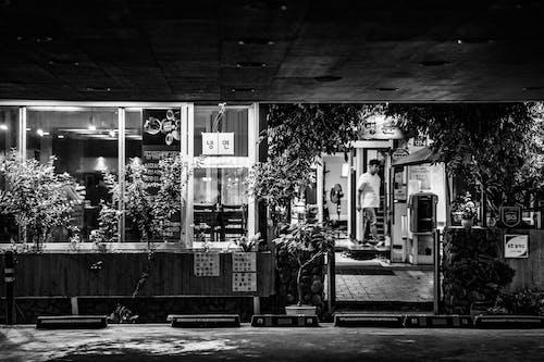 Ilmainen kuvapankkikuva tunnisteilla baari, kasvit, mies, mustavalkoinen