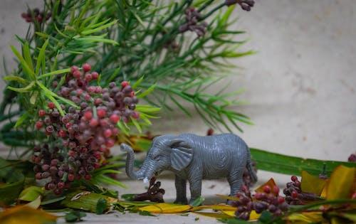 Gratis arkivbilde med dyr, elefant, leke, miniatyr